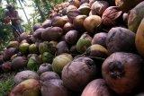 Sulut ekspor 5.500 ton minyak kelapa mentah ke Malaysia