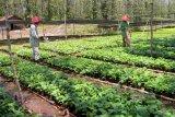 1.000 kebun bibit desa untuk Indonesia