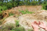 Laporan adanya kuburan massal di Rakhine, bagi AS