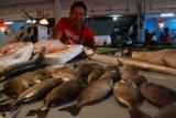 Harganya bisa Rp550 ribu/kg, ikan dingkis jadi pembawa berkah saat Imlek
