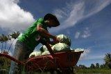 Harga Sayur Mulai Naik di Agam Jelang Ramadhan