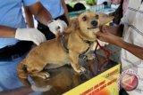 Persediaan Vaksin Anjing Gila Cukup