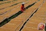 Bea Cukai belum menerapkan pembatasan impor tembakau