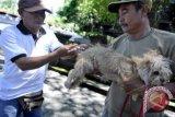 Pemkab Mitra wajibkan pemerintah desa terlibat pencegahan rabies