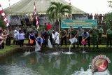 Wali Kota Manado tebar benih ikan air tawar