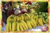 Bantul selenggarakan festival pisang angkat potensi lokal