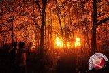 TNGM lakukan penghijauan lahan bekas kebakaran