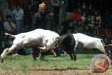 Relawan Joma dorong pilpres tanpa adu domba