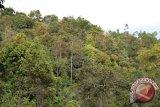 Watala Sampaikan Panduan Monitoring Hutan Kemasyarakatan