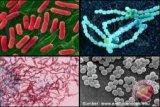 Perbedaan virus dengan bakteri
