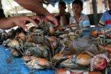 Jambi sita belasan ekor kepiting