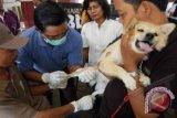 Yogyakarta beri layanan vaksinasi rabies gratis