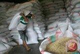 Stok kacang kedelai di Babel 180 ton