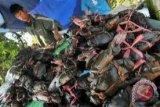 Pemkab Parimo siapkan puluhan ribu bibit kepiting bakau