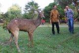 Ahok Kunjungi Taman Balekambang