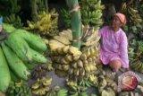Harga Pisang di Gorontalo Capai Rp75 Ribu/Tandan