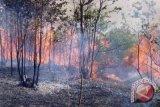 Taman nasional berbak terbakar
