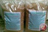 Distan DIY akan kembangkan varietas padi