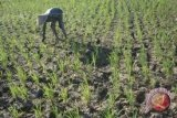 Pemkab OKU Timur produktifkan lahan kosong