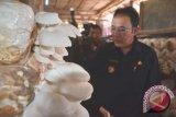 Budidaya jamur tiram di Palembang semakin berkembang