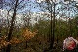 Hutan jati meranggas