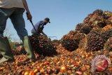 Indonesia permasalahkan Uni-Eropa hambat ekspor sawit