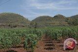 Program Gunung Kidul tingkatkan kunjungan taman batu mulo