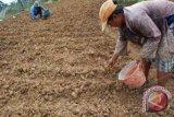Pemkab salurkan bantuan kultivator tingkatkan produksi hortikultura