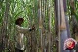 Sumitro: Munas Aptri Yogyakarta ajang evaluasi kepengurusan