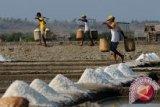 Pemerintah mengkaji teknologi piramid desalinator pembuatan garam