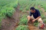 Hidroponik cara bercocok tanam di lahan sempit