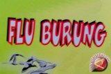 Dinkes:  Warga Lampung waspadai virus flu burung
