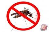Kemkes: tanaman sereh ampuh mengusir nyamuk malaria