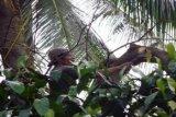 Tebang Pohon/Foto Dedi