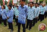 Ribuan honorer Kotabaru menjadi tenaga non-PNS