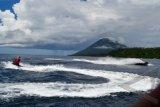 Lumba Lumba Muncul Di Bunaken