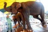 Seekor Gajah Sirkus Diamankan