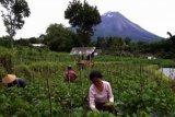 Pemkab dorong petani kembangkan hortikultura
