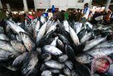 Lemak ikan enyahkan risiko terkena penyakit jantung