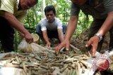 Polisi Temukan Puluhan Selongsong Penembakan Mapolsek Poso