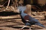 Burung Hasil Sitaan
