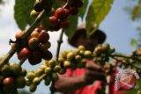 Harga kopi anjlok, negara produsen cari solusi mengatasinya