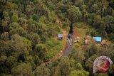 Dishut Musirawas hentikan pengeluaran izin hasil hutan