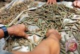 Gegana Polda DIY amankan peluru temuan nelayan