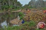 Kadin: Petani buah kelapa rendah posisi tawar