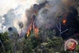 Dishut Musirawas: petugas patroli antisipasi kebakaran hutan