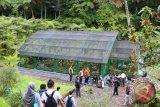 Kunjungan ke Kebun Raya Cibodas sepanjang tahun capai 619.843