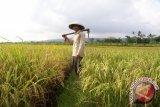 Pertanian Kota Waringin Timur Dapat Alokasi Rp100 Miliar