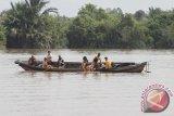 Tertimpa pohon saat naik perahu, seorang ibu tenggelam di sungai