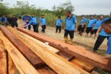 Pembalakan Hutan Lindung/Joko Sulistyo
